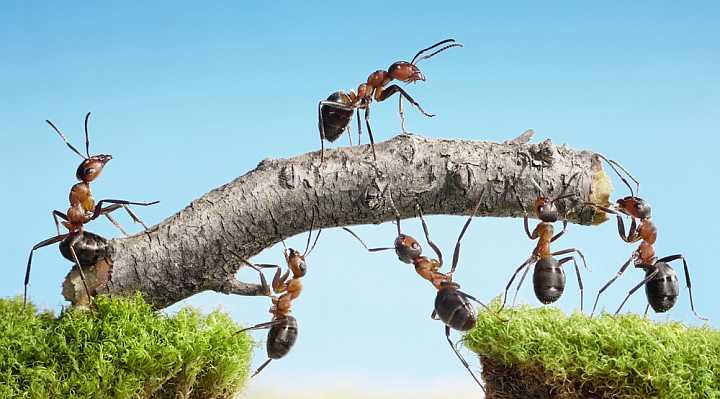 Firmaarrangement og Teambuilding