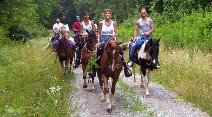 Ridning og leje af heste