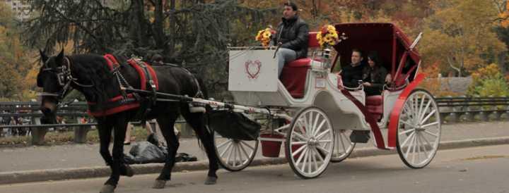 Hestevogn og hestevognskørsel