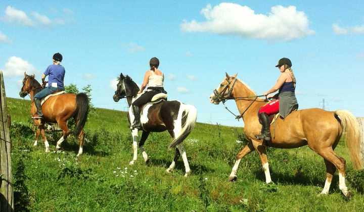 Nygaard udlejning af heste