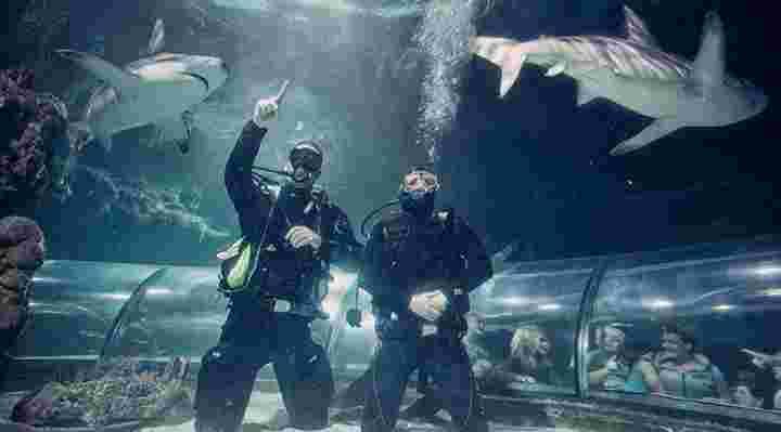 Dyk med hajer