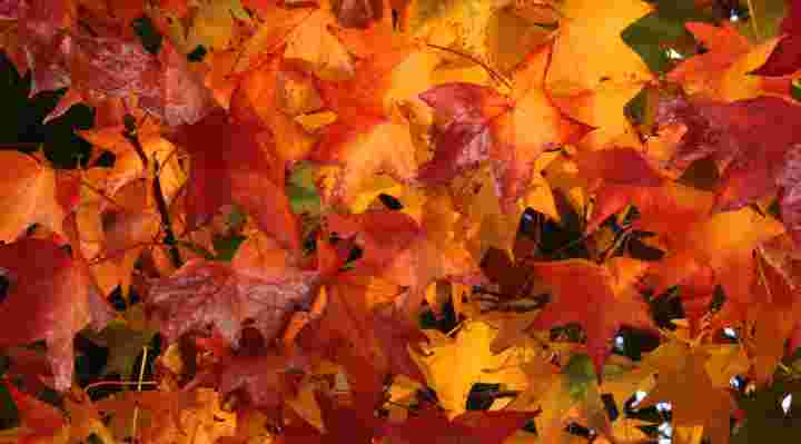 Efterårsferie aktiviteter og idéer