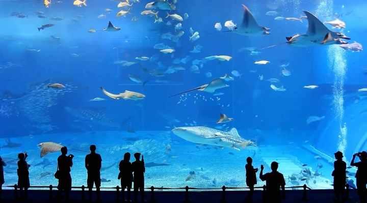 Akvarier i Danmark