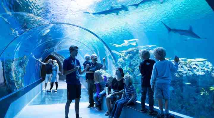 DEN BLÅ PLANET - Danmarks Akvarium