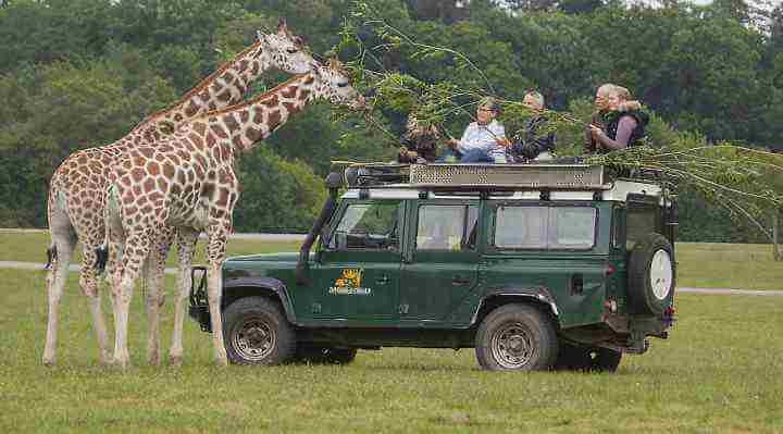 Giraf VIP