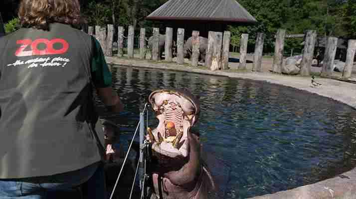 Københavns Zoo - Dyrepasser for en dag