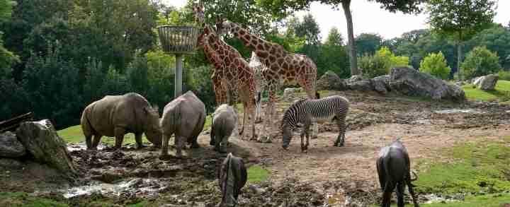 Zoo, zoologisk have og dyrepark i Danmark