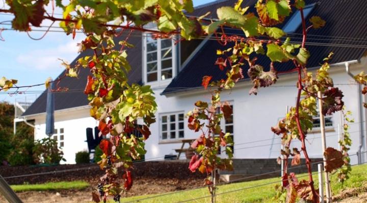 Oplev dansk vingård nær Kolding