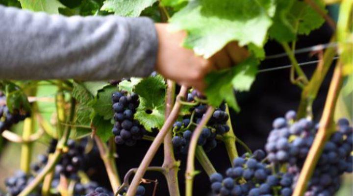 kalundborg-sjælland-romantisk-vinsmagning-rundvisning-dyrehøj-vingaard-oplevelse-luksus-vin-mad-naturen-gavekort