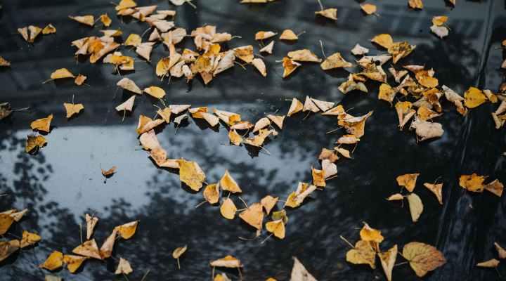 Kærlighed i efteråret